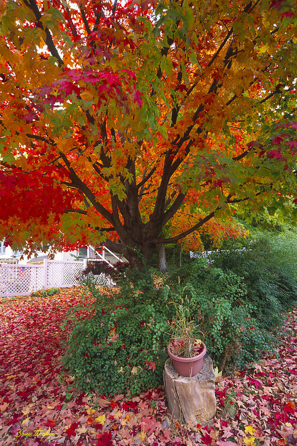 Fall Photograph - Front Yard by Bruce Thompson