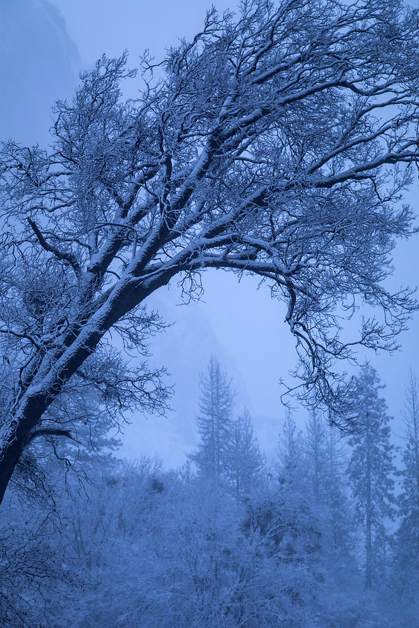 Trees Photograph - Frost Blue by Vincent James
