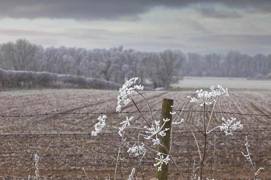 Field Photograph - Frost-covered Rural Field Cumbria by John Short