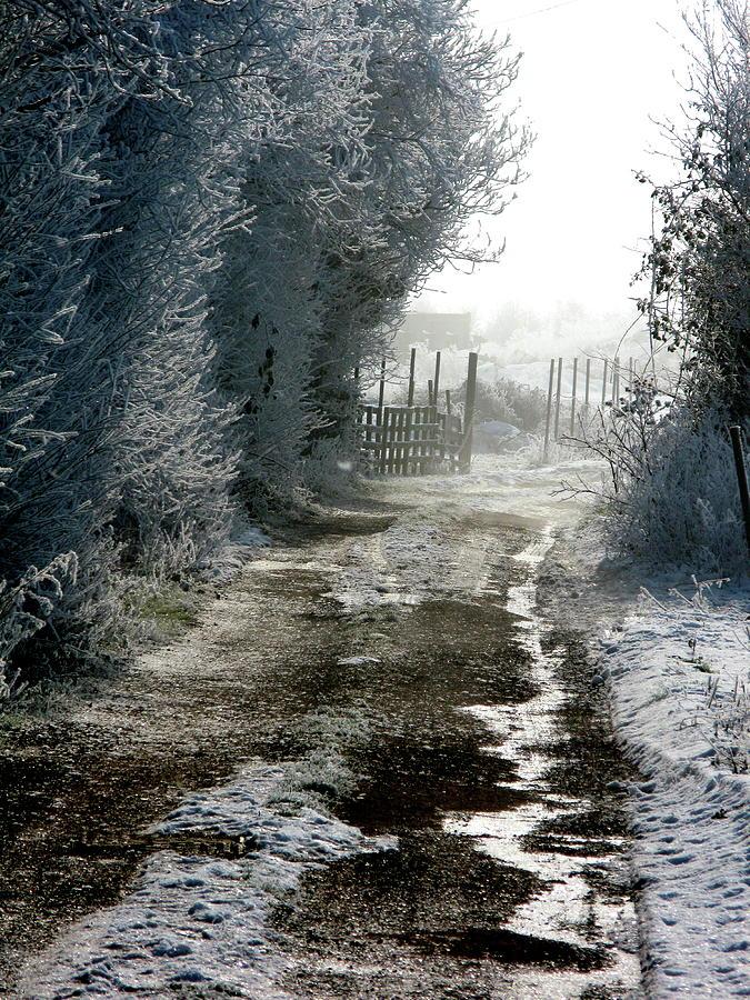 Frost by Ian Sanders
