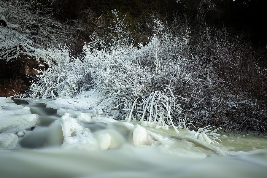 Bitter Photograph - Frost by Jakub Sisak