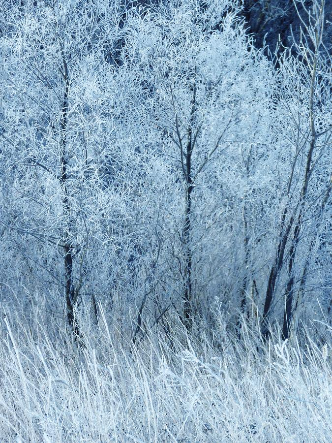 Frost Photograph - Frosted Beauty by Lori Frisch