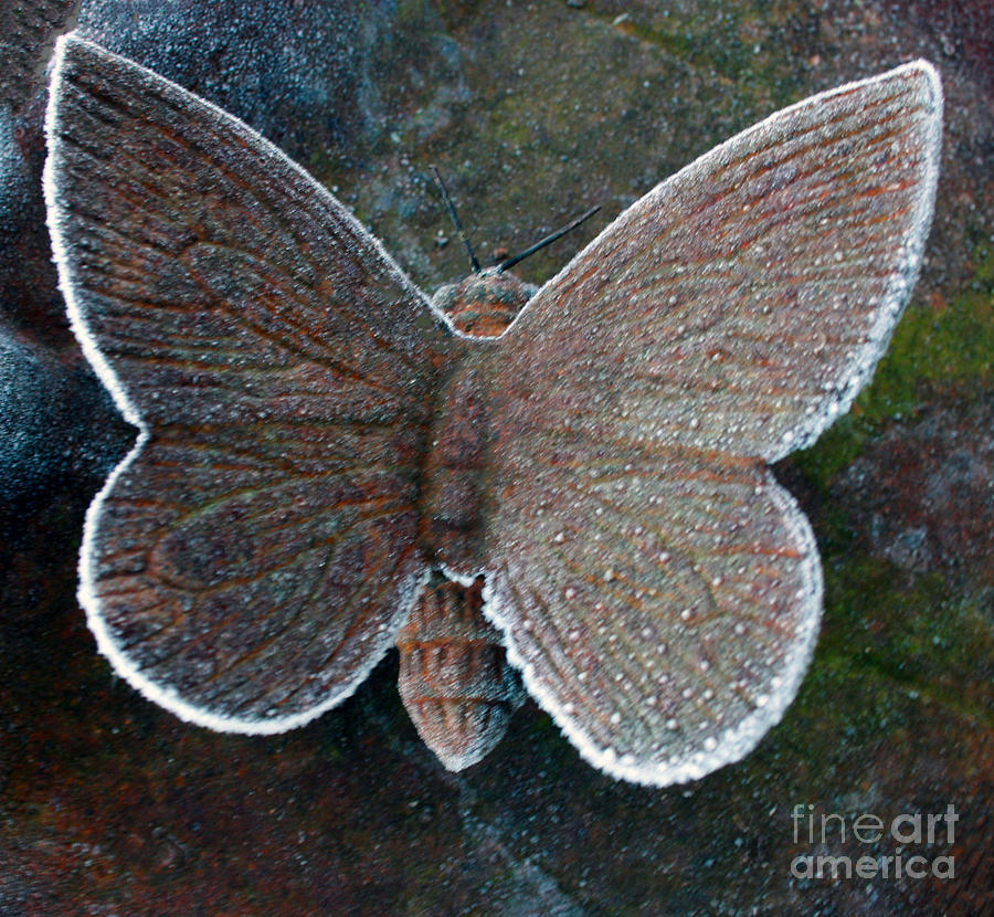 Butterfly Photograph - Frosted Butterfly by Kathy DesJardins