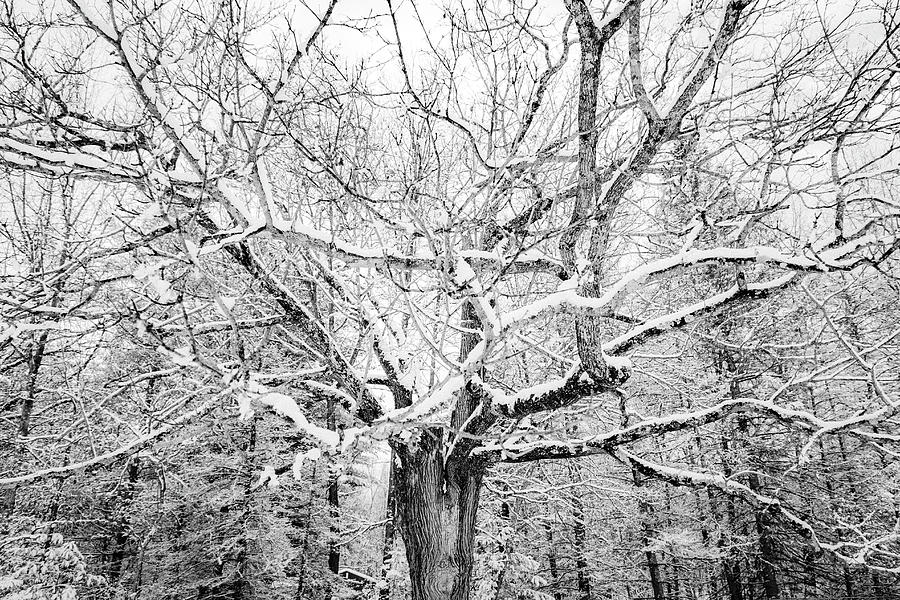 Frosted Photograph by Kendall McKernon