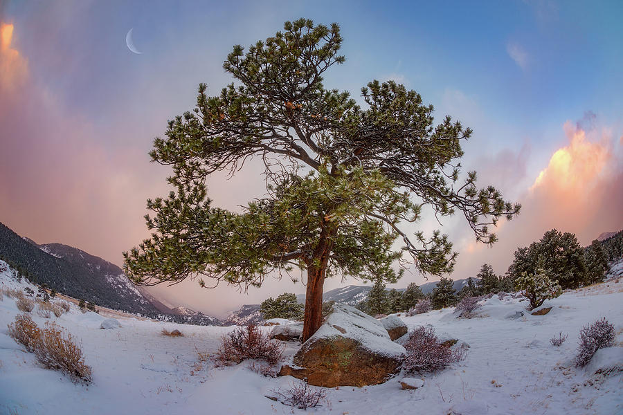 Frosted Mountain Moon Photograph