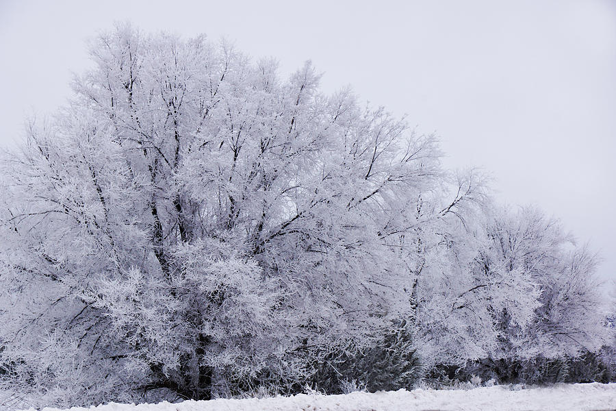 Frosted tree line by Julie Carter