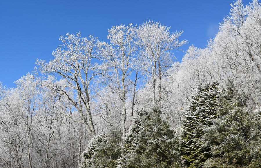 Frosted Trees Blue Sky 1 Photograph