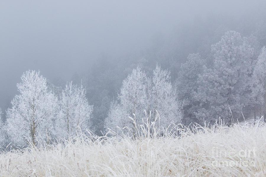 Frosty Aspen Trees On Bald Mountain Photograph