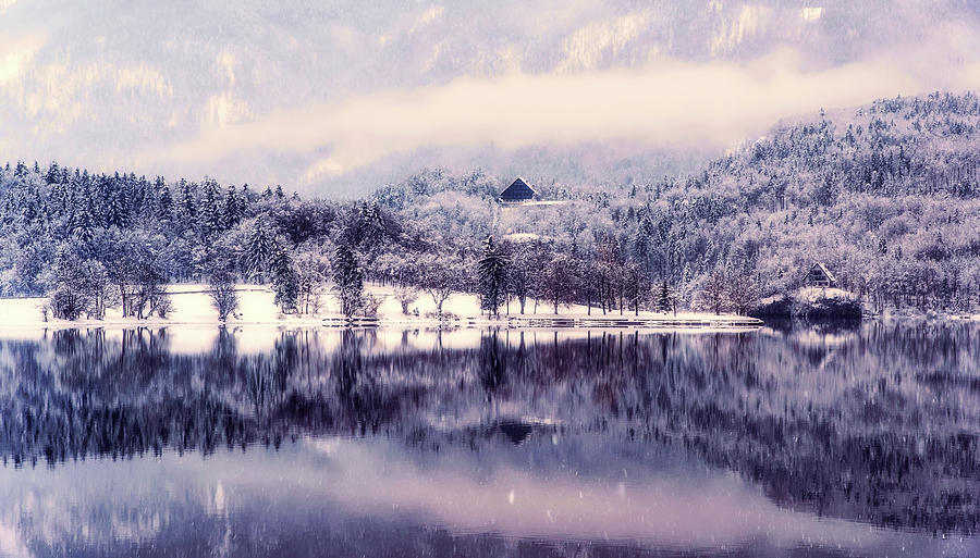 Frost Photograph - Frosty Morning by Ales Krivec