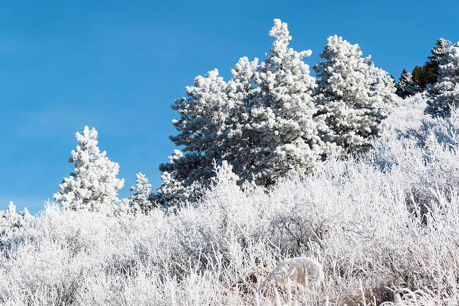 Frosty Mountainside Photograph