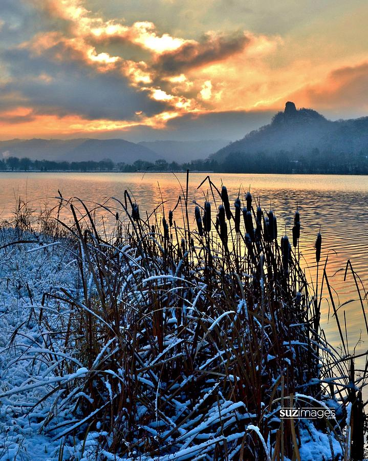Frozen Cattails by Susie Loechler