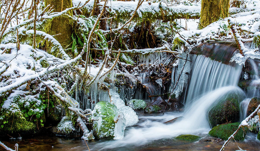 Nature Photograph - Frozen Creek by Jason Brooks