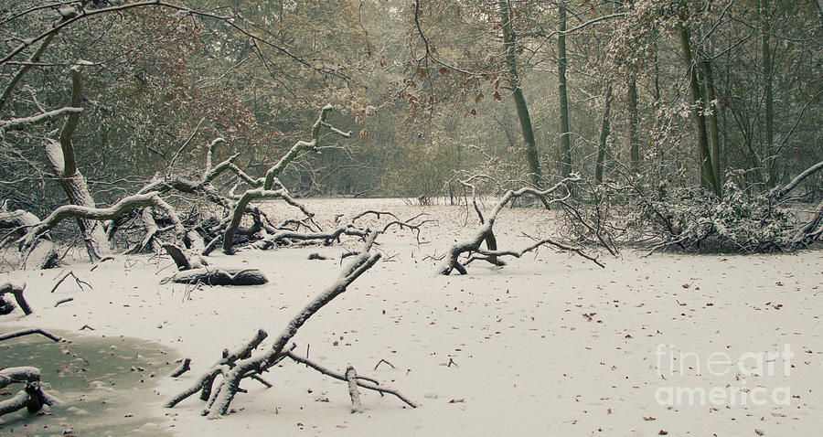 Countryside Photograph - Frozen Fallen Wide by Andy Smy