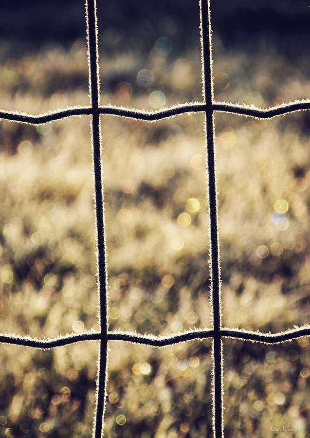 Frozen Photograph - Frozen Fence by Wim Lanclus