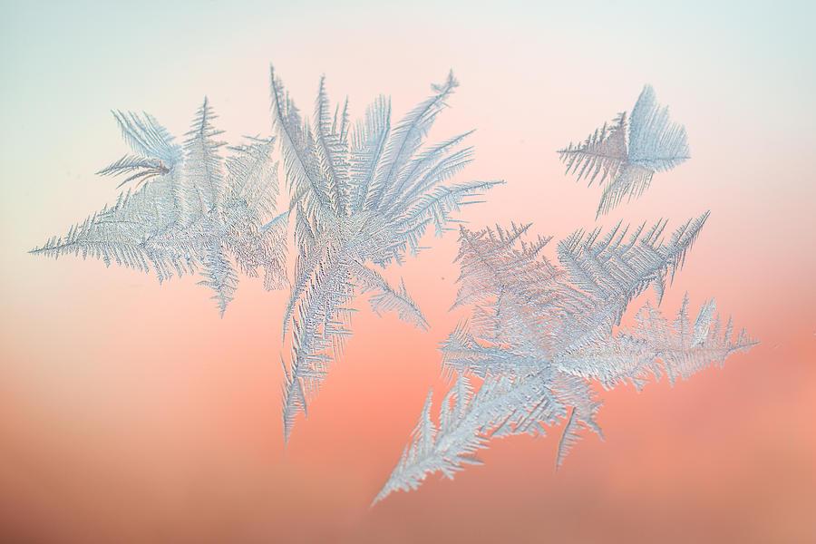 Abstract Photograph - Frozen Fractals 01 by Jakub Sisak