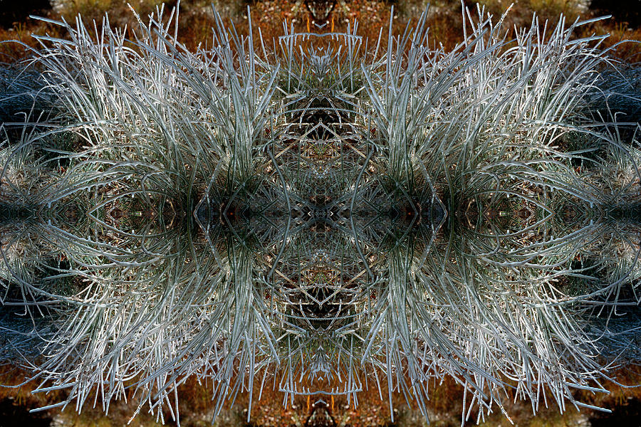 Ice Photograph - Frozen Grass Abstract by Gary Cloud