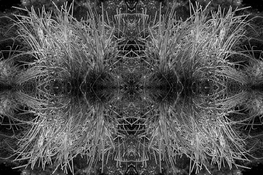 Ice Photograph - Frozen Grass Abstract In Bw by Gary Cloud