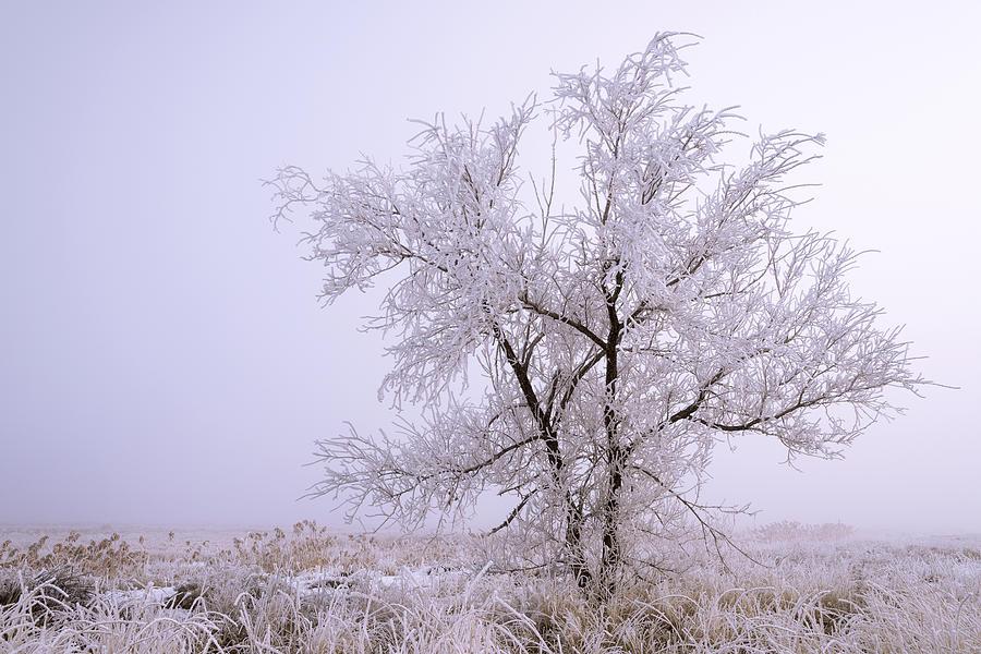 Frozen Ground Photograph - Frozen Ground by Chad Dutson