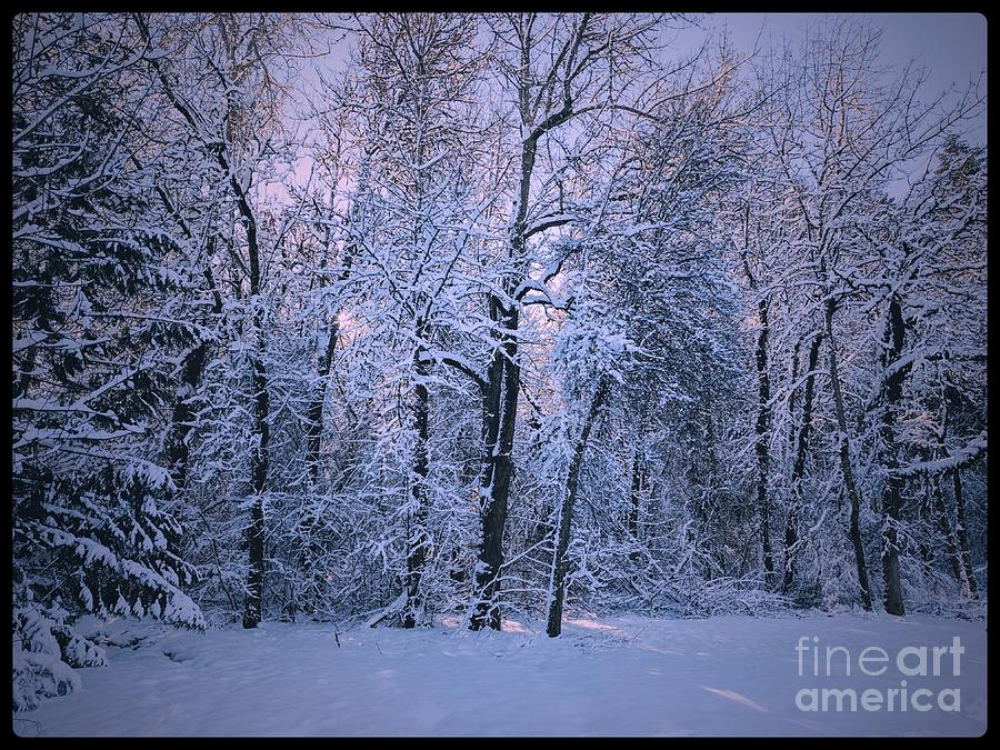 Cold Photograph - Frozen by Julie Pacheco-Toye