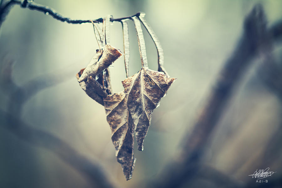 Frozen Photograph - Frozen Leaves by Adnan Bhatti