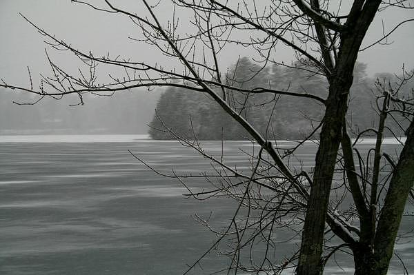 Winter Photograph - Frozen Mist by Jessica Foley