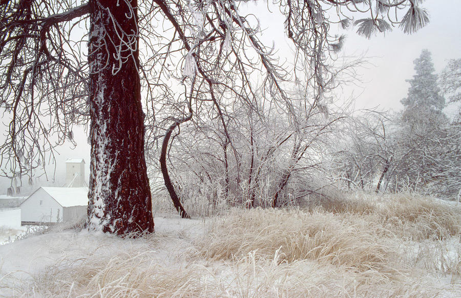 Palouse Photograph - Frozen Morning In Palouse by Jerry McCollum