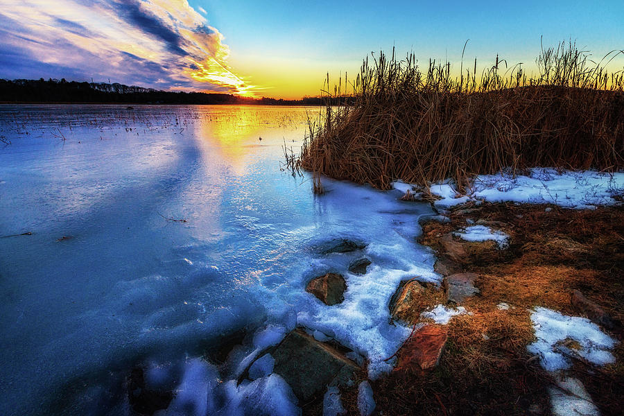 Frozen Plume of Great Meadow Sun by Sylvia J Zarco
