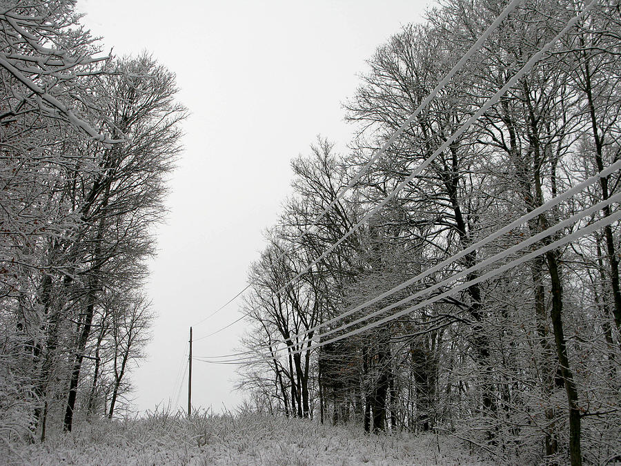 Trees Photograph - Frozen Power Lines by Martie DAndrea
