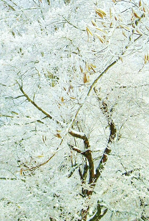 Tree Photograph - Frozen by Sherry  Kepp