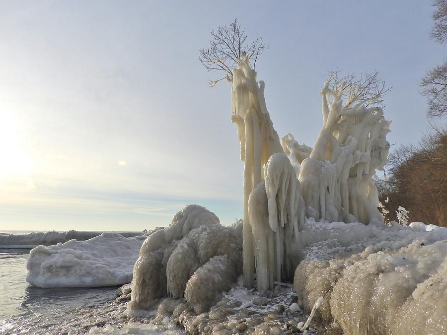 Frozen Photograph - Frozen Tree by Red Cross