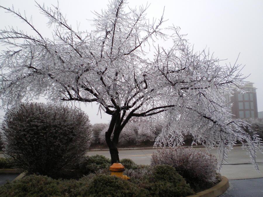 Ice Photograph - Frozen Tree by Sarah Ann Henderson