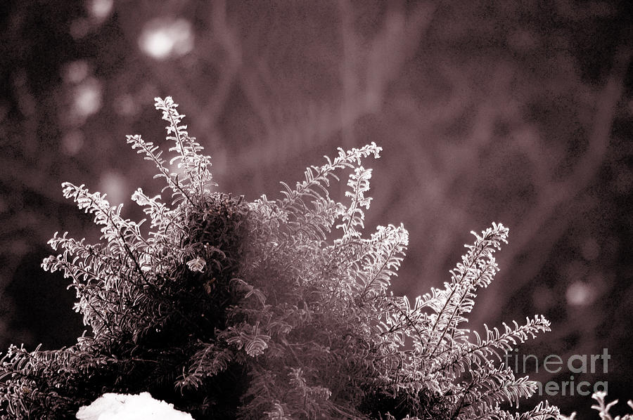 Frozen - Winter In Switzerland Photograph