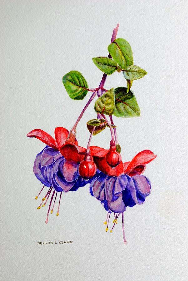 Fuchsia Painting - Fuchsias by Dennis Clark