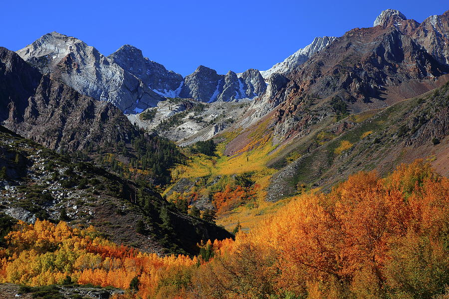 Full autumn display at McGee Creek Canyon in the Eastern Sierras Photograph by Jetson Nguyen
