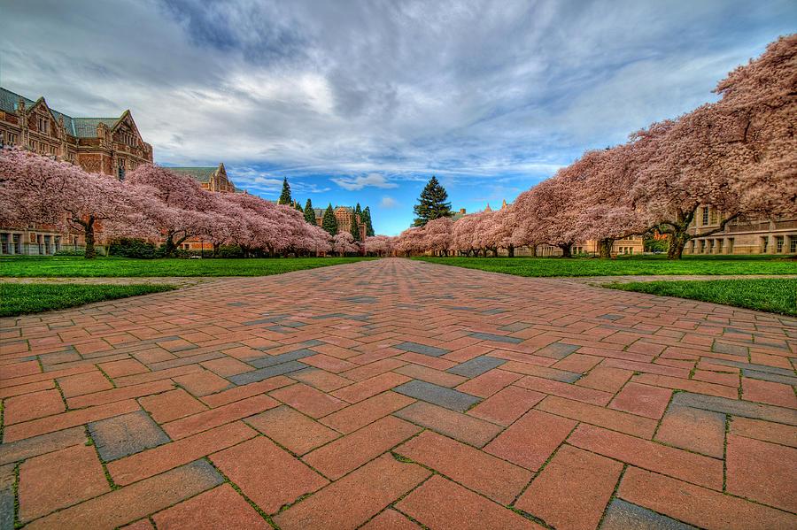 University Of Washington Photograph - Full Bloom by Dan Mihai