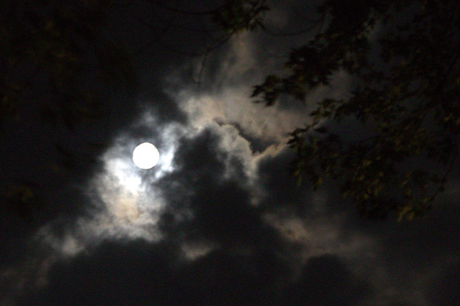 Full Buck Moon by Lori Burke