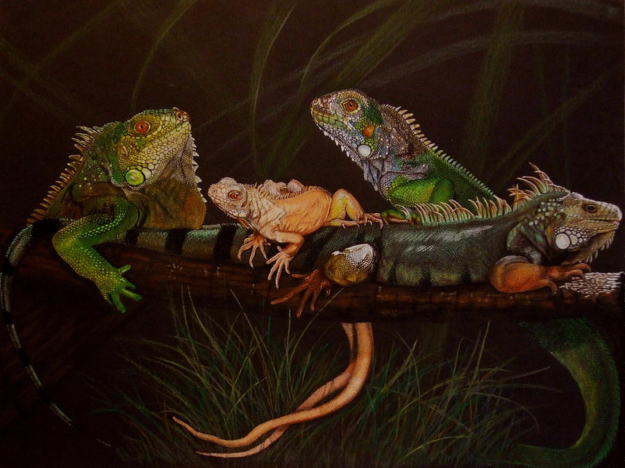 Iguana Drawing - Full House by Barbara Keith