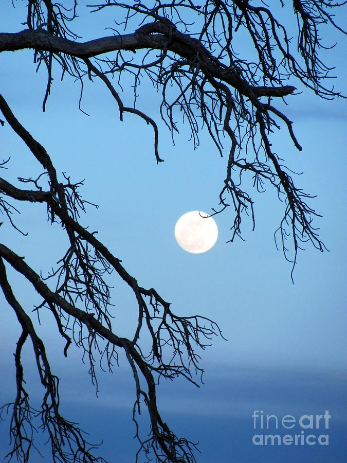 Full Moon Blue Sky Photograph