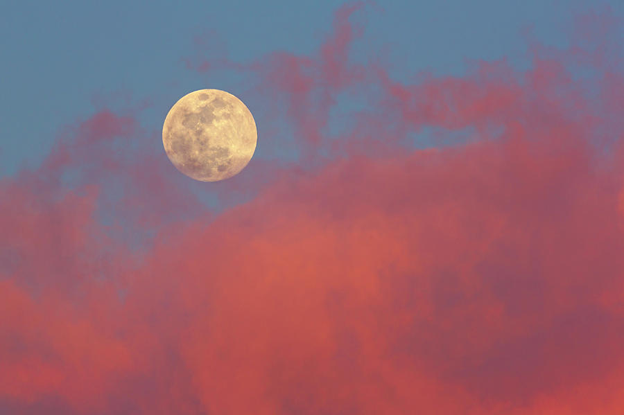 Full Moon Fever Photograph