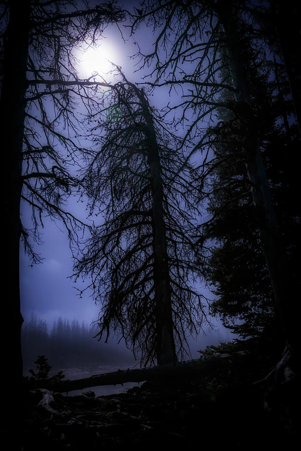 Night Photograph - Full Moon In The Woods by Cat Connor