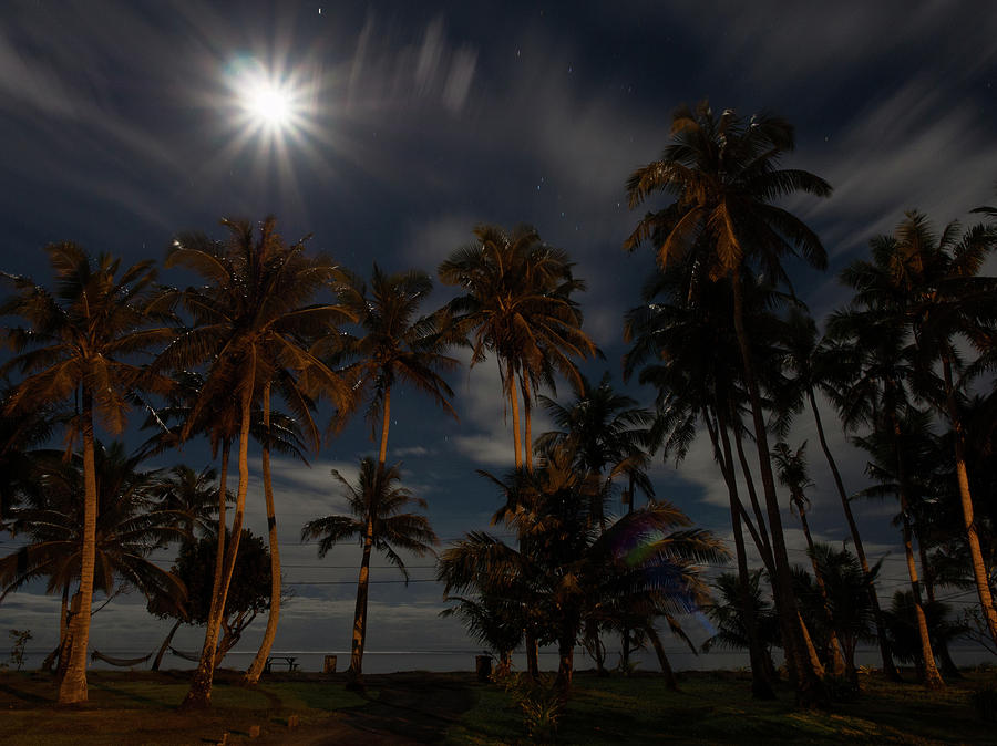 Full Moon over the Palm Trees by Brenda Smith DVM