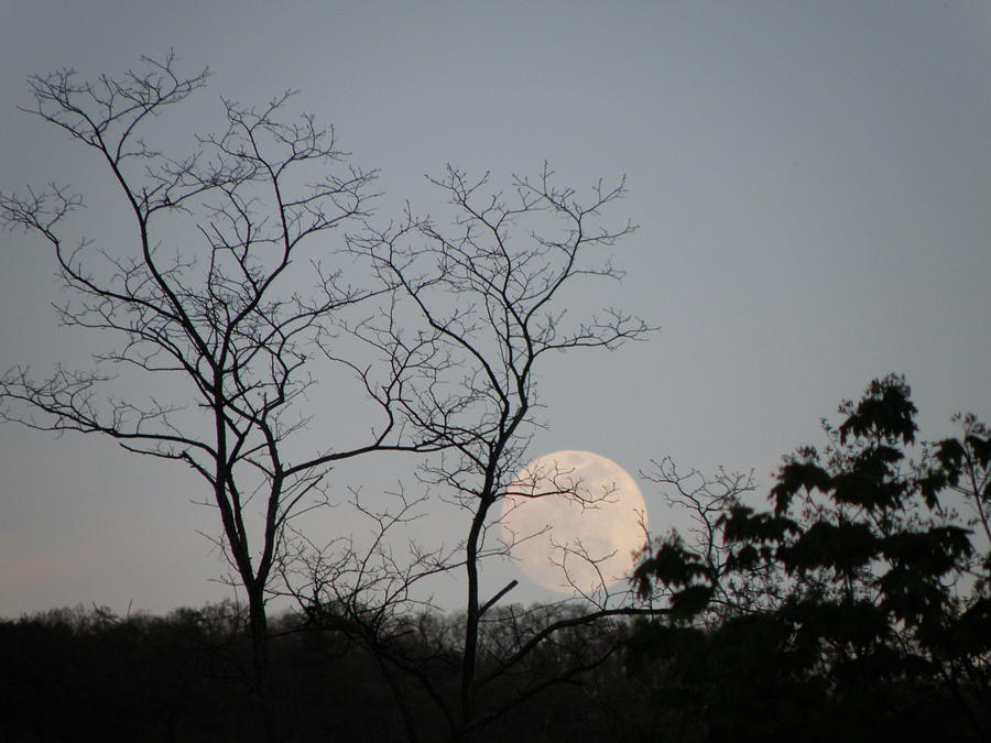 Moon Photograph - Full Moon Rising by Krista  Simmons