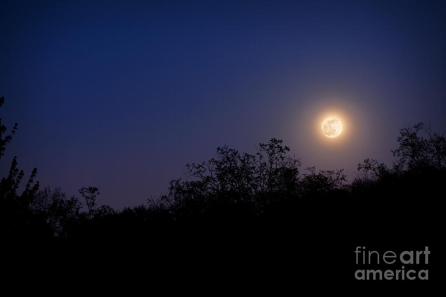 Moon Photograph - Full Moon Rising Over Trees by Sharon Dominick