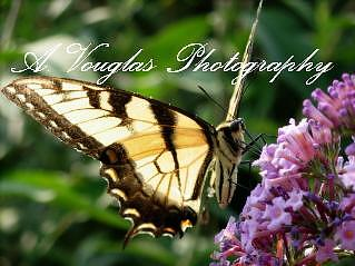 Digital Photography Photograph - Full Of Life by Amanda Vouglas