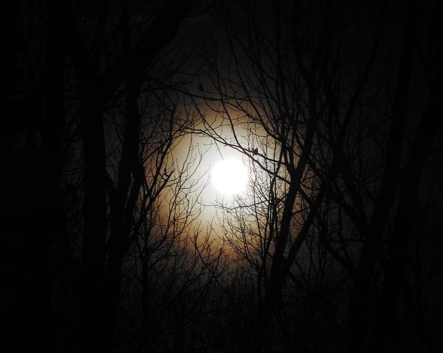 Full Moon Photograph - Full Pink Moon Rising by Traci York