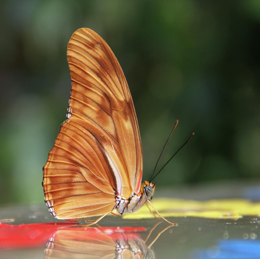 Butterfly Photograph - Full Sail by Odd Jeppesen