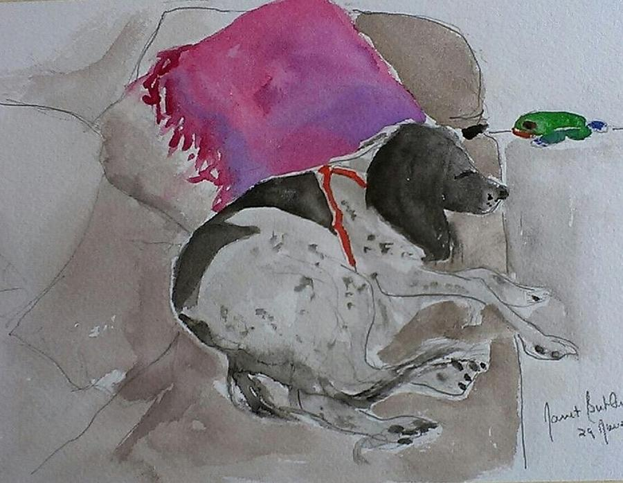 Watercolors Painting - Fulmi And Pink Pillow by Janet Butler