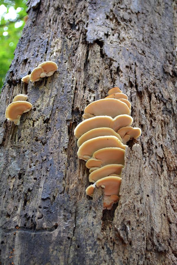 Fungus Photograph - Fungus by Tamra Lockard