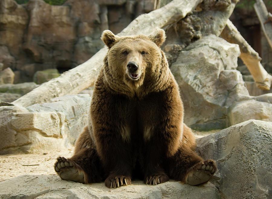 Hunting Funny Black Bear Animal Happy Birthday 2 Note Card ... |Funny Black Bear Family
