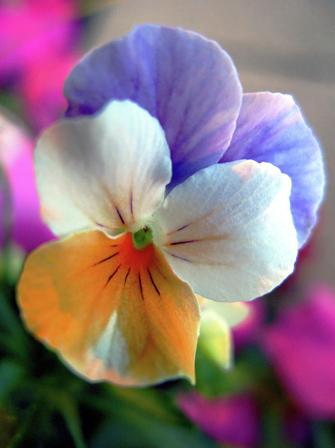 Flower Macro Photograph - Funny Face by Suzy Freeborg